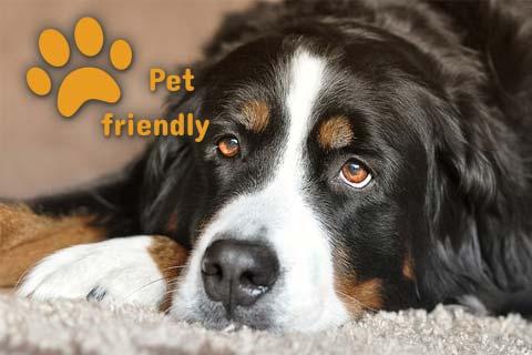 Hotel In Pet friendly
